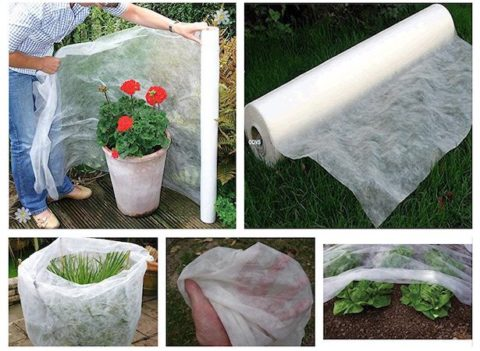 Protezione piante